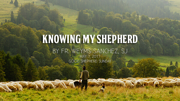 Photo-in-Good-Shepherd-Sunday