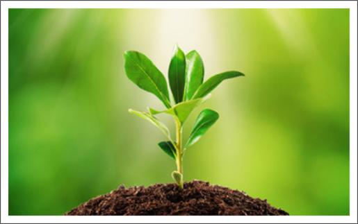 spiritual-growth-princ1